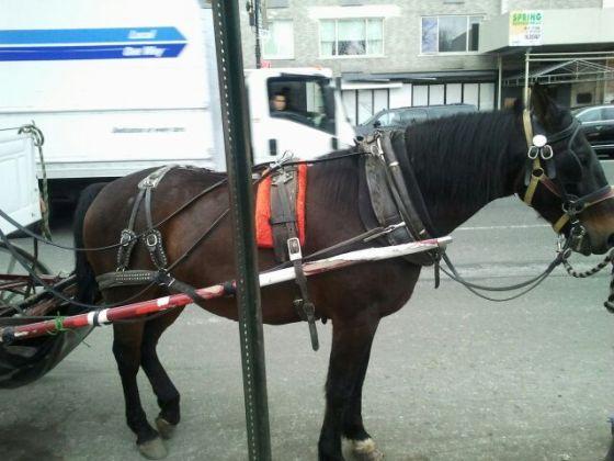 horse bevel